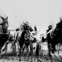 Grasbaanraces