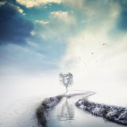 The white horizon