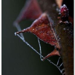 Stekelweb
