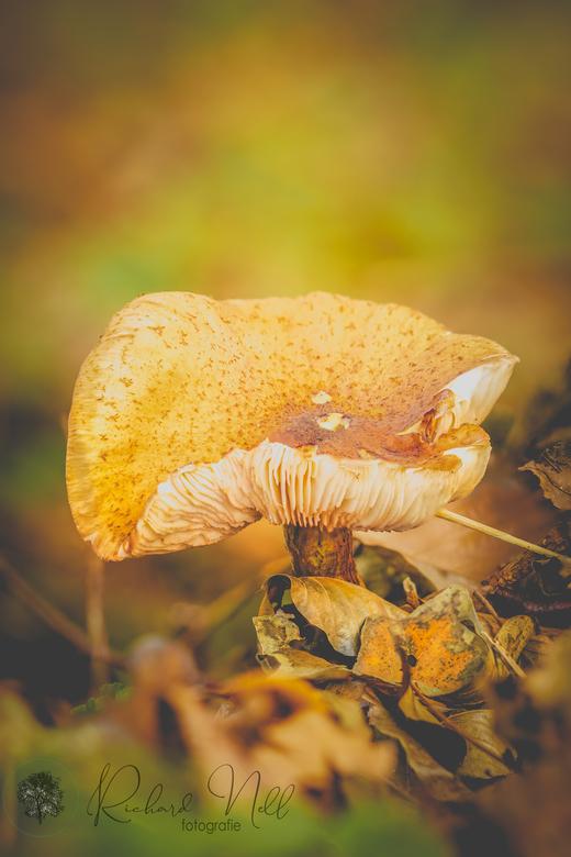 paddestoel 8-11-20 03 - De laatste paddenstoel voor het jaar?