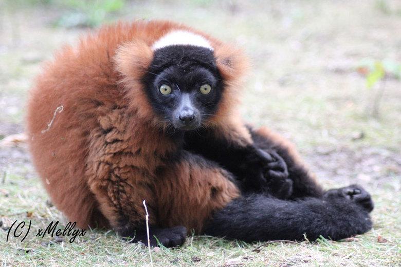 Looking right at you - deze aap zit heerlijk op de grond om zich heen te kijken