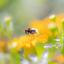 Bee soft