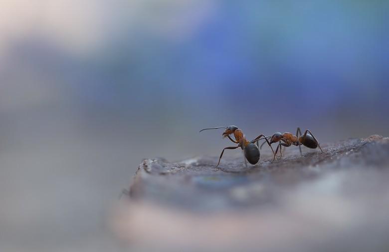 werk overleg - zo af en toe moet er even overlegd worden...zo gaat dat in hard werkend mierenland