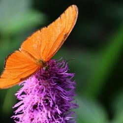 Vlinders aan de Vliet -1-