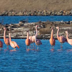 Flamingo's 2019