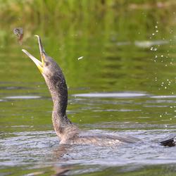 Jonglerende visser!