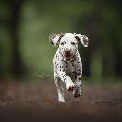 Puppy in actie