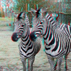 Blijdorp Zoo Rotterdam 2019 3D