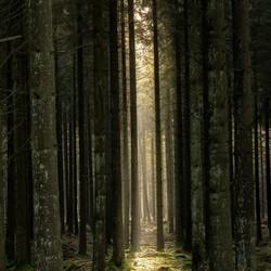Enkele zonnestraal in dicht bos
