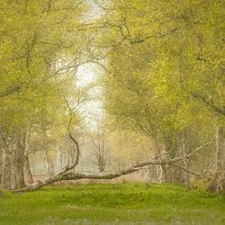 Jong groen en oude bomen............