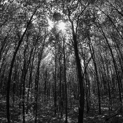 Het dak van het bos.....