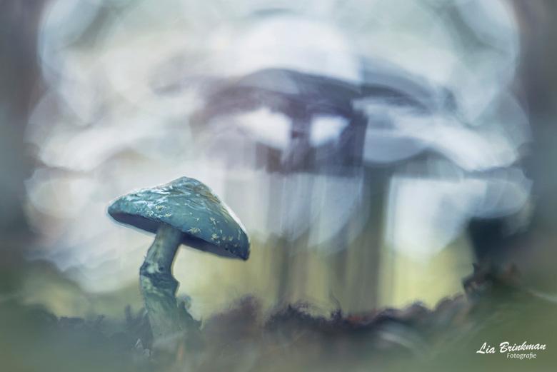 Kopergroenzwam - Kopergroenzwam,<br /> Tijdens de zoomdag in Dorst wees Daan ons op deze bijzondere paddenstoel. Ik had hem nog nooit eerder gezien.