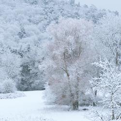 Winters wit wonderland
