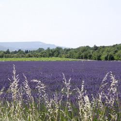 Heerlijk in de Provence
