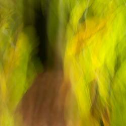 Het Speulderbos in abstract