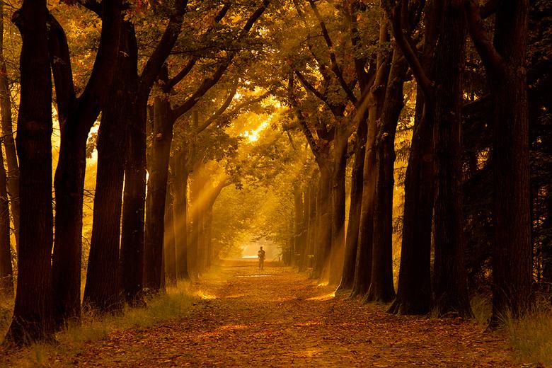 herfst - .