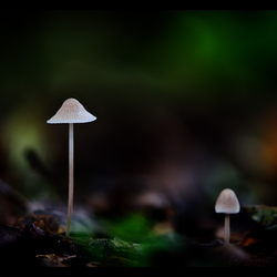 In the dark forest ...