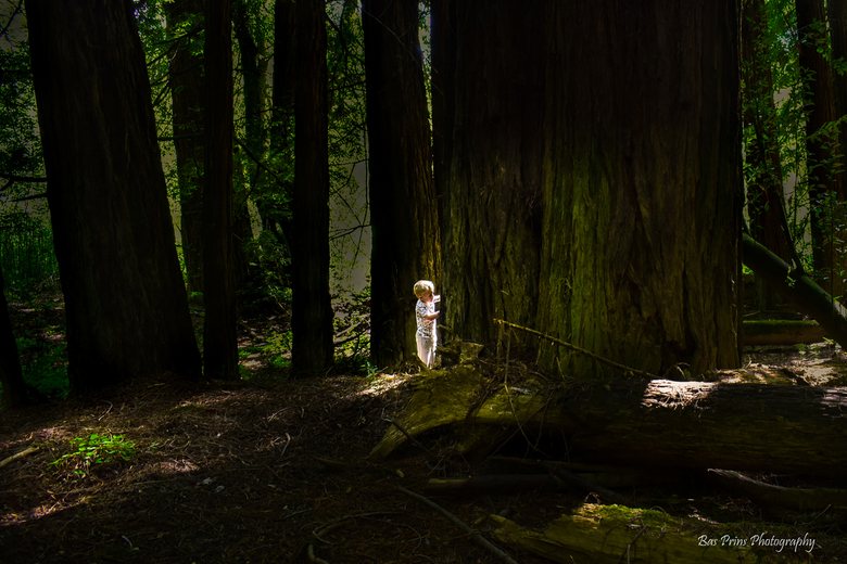 there will always be light in every deep dark forest - there will always be light in every deep dark forest - Kjelt @ oregon forest usa
