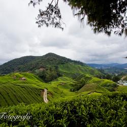 Theeplantages Maleisie, Cameron Highlands