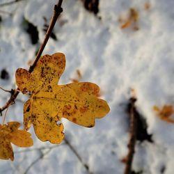 winter meet herfst