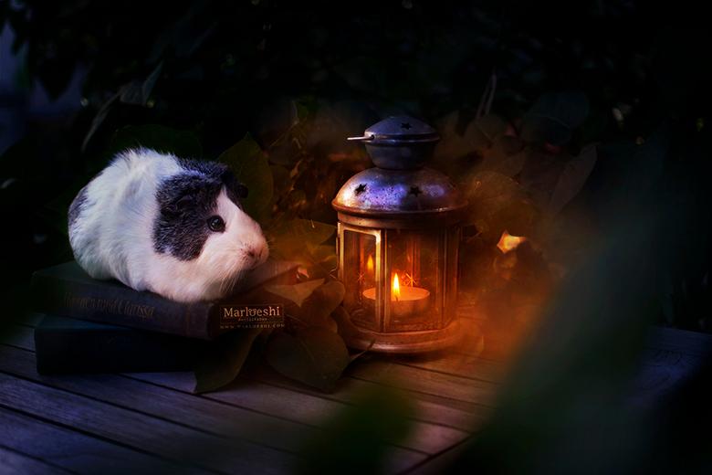 Light in the dark - Mieps mocht weer eens model staan! Dit idee met een lantaarntje heb ik ook met een menselijk model uitgevoerd, maar Mieps kan dan