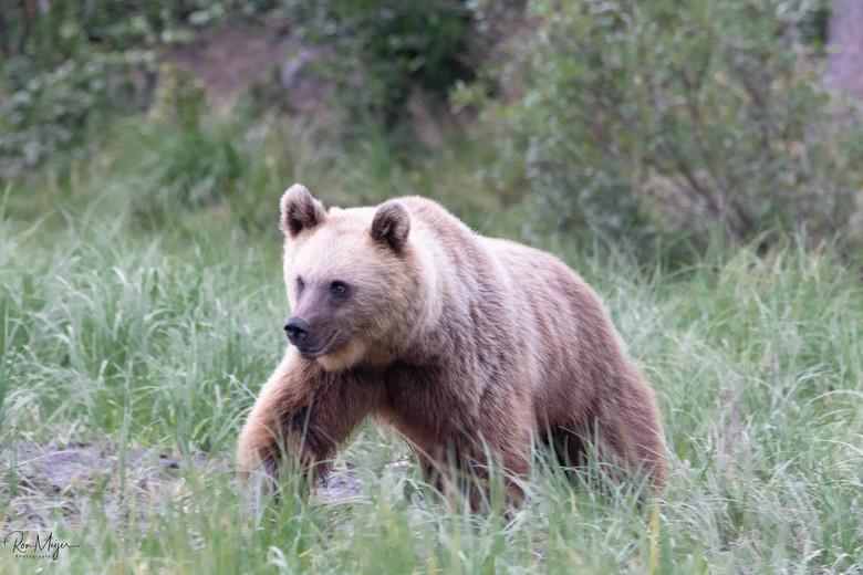 Prachtige beer -