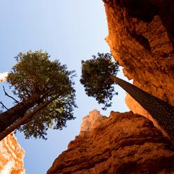 Hoge bomen in Bryce Canyon