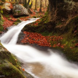 Autumn Forrest and Stream