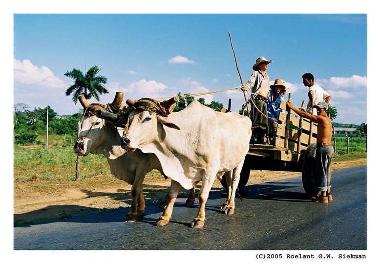 Spankracht in Cuba - Ergens onderweg in Cuba kwamen we dit span tegen. Ik blijf het bizar vinden dat we hier naar begin 21e eeuw kijken...<br /> <br
