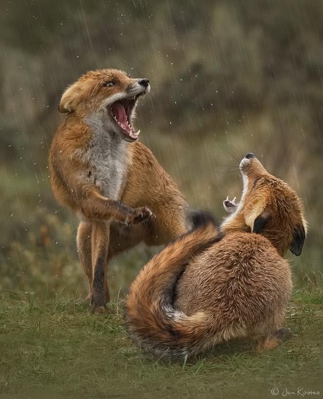 Na zonneschijn komt regen, veel regen. - Ondanks de regen vonden deze twee dat hun geschil beslecht moest worden.