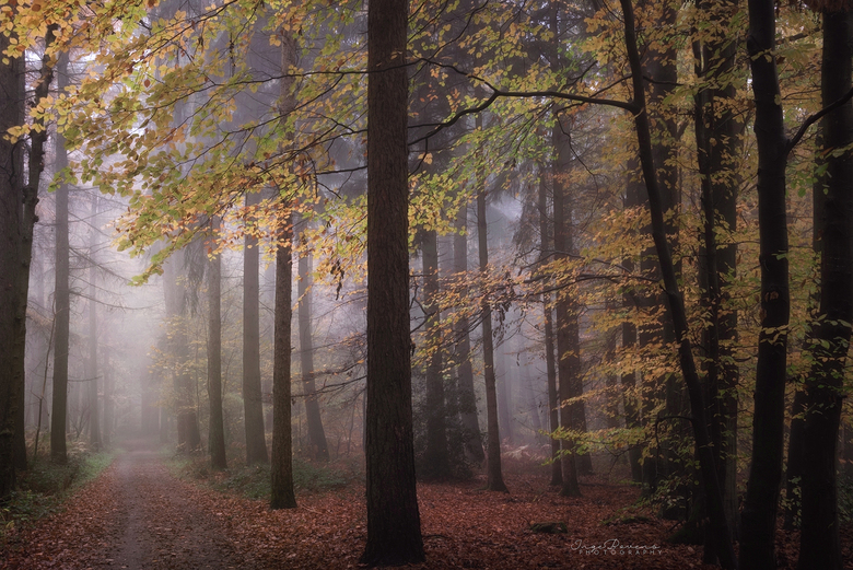 The Wonder of Fall. -