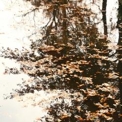 weerspiegeling van de bijna kale bomen.