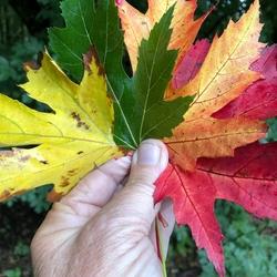 Herfstkleuren..