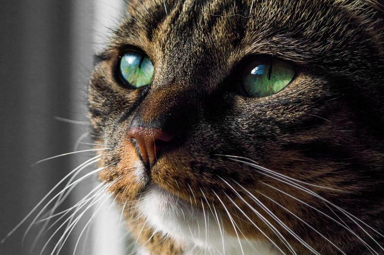 Poes met groene ogen - Dit is een van mijn katten.