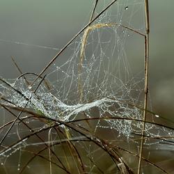 Web....