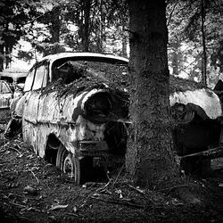 car graveyard 15