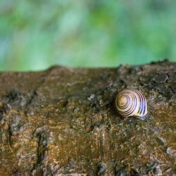 . . . Snail Tale . . .