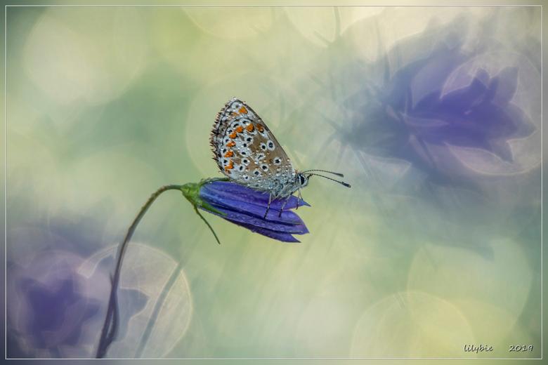 purple dream  - spelen in het veld met licht