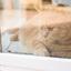 Het leven van een binnen kat