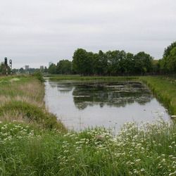 Landschap tussen Waterhuizen en Groningen.