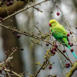 Utrechts vogeltje