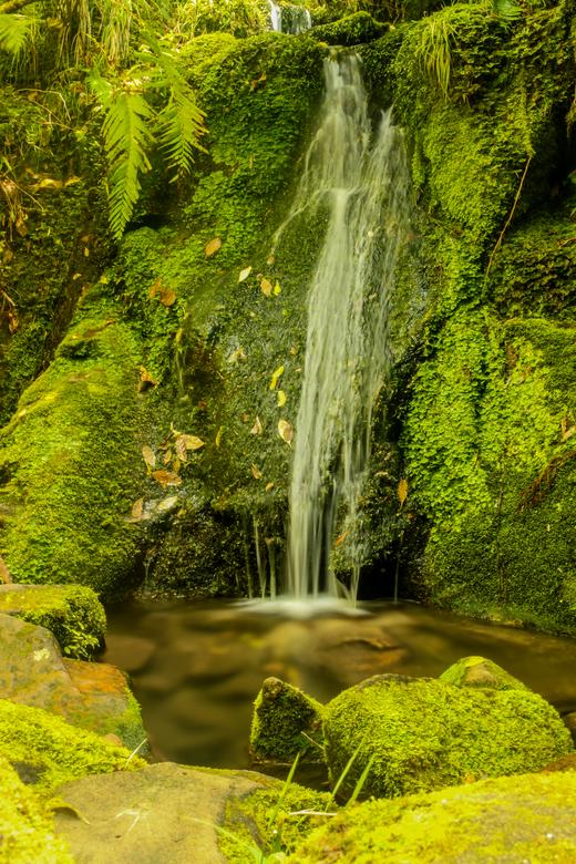 Silky stream - Zijdezacht watervalletje dat ik in een prachtig bos in Nieuw-Zeeland tegen kwam.