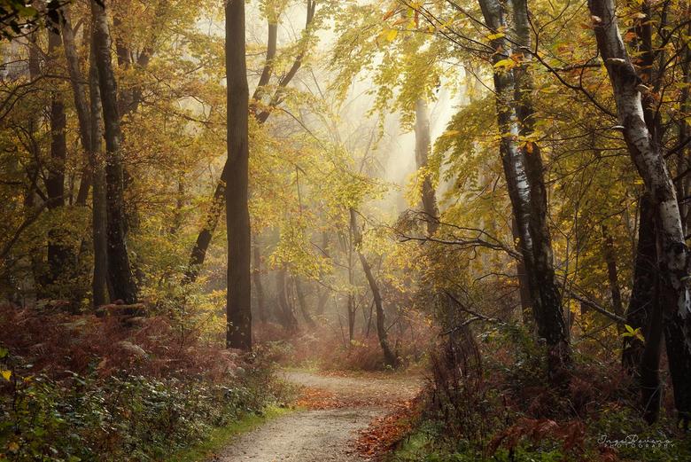Autumn Dreams. -