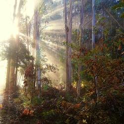 Lichtinval ochtend in het Bos