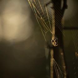 Klein spinnetje