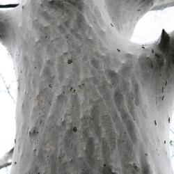 Meer rups dan boom