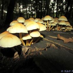 Groep paddenstoelen