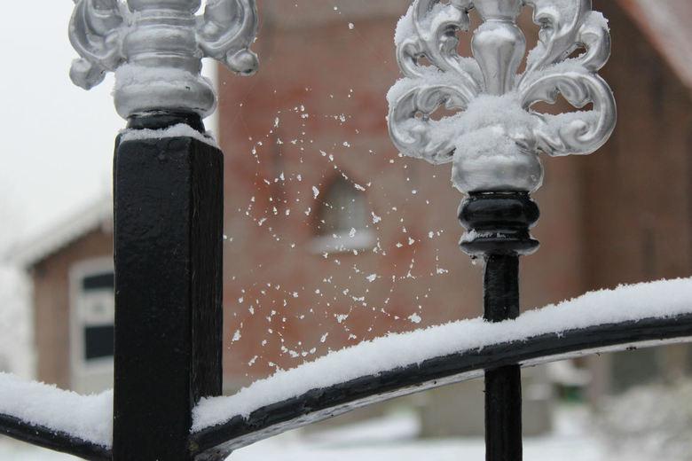 eerste sneeuw, tere vorm - Vanmorgen 4 jan. 2016. De eerste sneeuw van deze winter. Even rondje door dorp gemaakt.<br /> Bij het kerkje zag ik dit we