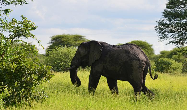 botswana - olifant in chobe national park