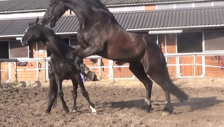 En nu ophouden!!! - Het ene paard stond de andere zo te treiteren, dat hij maar even de andere DUIDELIJK ging maken dat hij daar niet van gediend was.